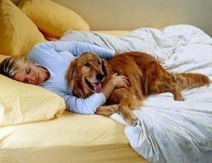 Корм Royal Canin Renal: состав, особенности применения