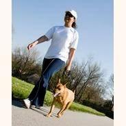 Прогулки с собакой — как провести время с пользой
