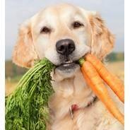 Как выкормить недоношенных щенков