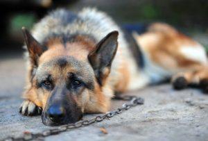 129-shepherd-chain