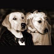 Хитрости исложности собачьей любви или все овязке