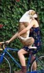 Собака ивелосипед