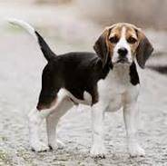 Что делать, если вы нашли собаку