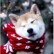 Собака и холода. Правила комфортной зимовки