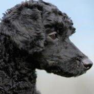 Особенности разных типов шерсти у собак