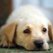 Невидимые симптомы болезней у собак