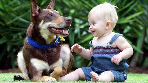 153-dog-child
