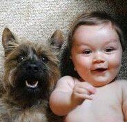 Собаки-няньки — миф или реальность
