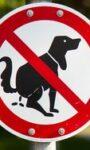 Генетическая экспертиза — что предлагает наука рядовому любителю собак?