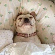 Как отучить собаку залезать на кровать?
