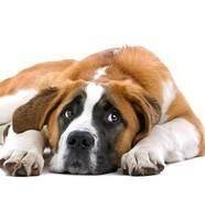 Признаки рака у собак