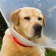 Случайные травмы у собак