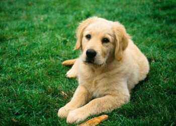 5 правил, которые смогут продлить жизнь вашей собаке