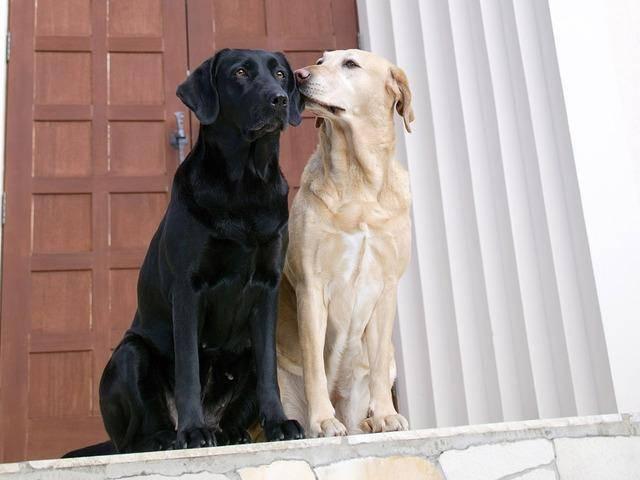 стерилизация собак, кастрация собак,