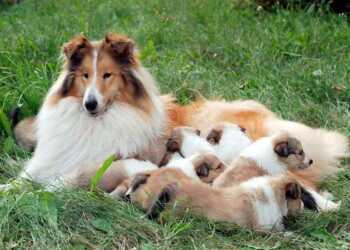 Роды собак