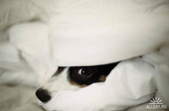 трусливая собака, собака боится