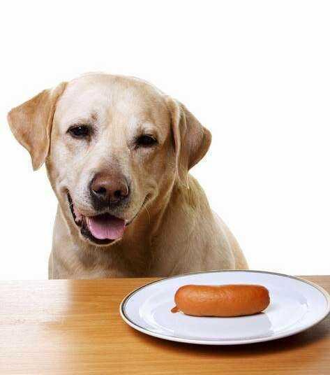 собака ворует со стола