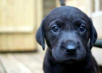 завести щенка, щенок в доме, завести собаку, щенок, собака