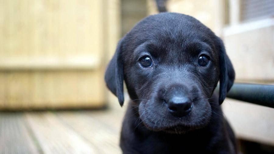 Как помочь щенку адаптироваться в новом доме