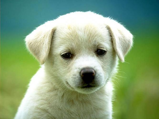 отравилась собака, отравление собак, собака скулит, собака дрожит, собака тяжело дышит, собака теряет равновесие