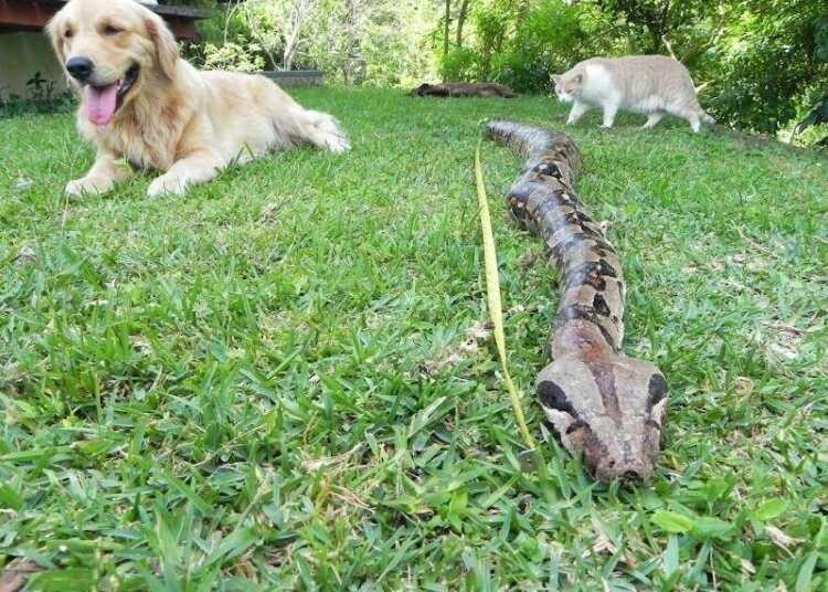 собака и змея