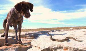 змея и собака