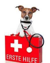 аптечка для грумера, аптечка для собаки