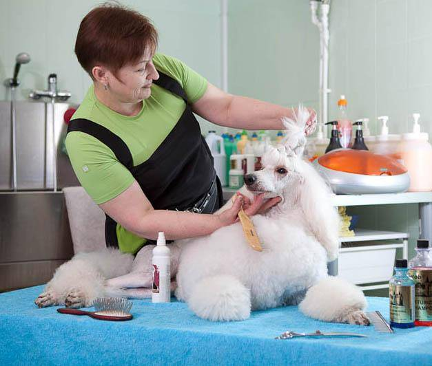направления груминга, груминг, салонный груминг, пет-груминг, породные стрижки собак, конкурсный груминг