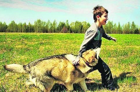 где содержать собаку, вольер для собаки, собака в клетке, где держать собаку, где содержать собаку, счастливая собака, собачье счастье