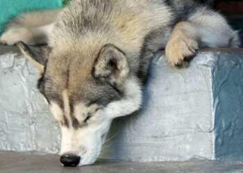 собака подбирает с земли, как отучить собаку подбирать с земли, собака ест с земли, отучить собаку есть с земли