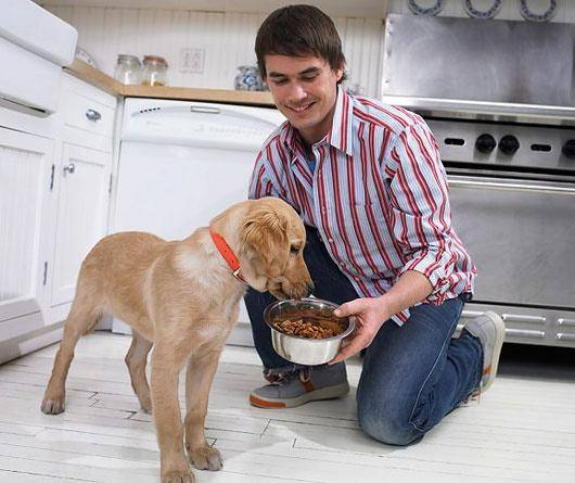собака ест с рук