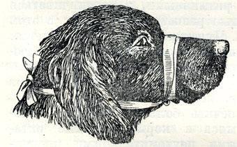 фиксация собаки, как зафиксировать собаку, фиксация челюстей,