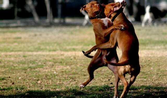 драка собак, как разнять собак, собаки дерутся