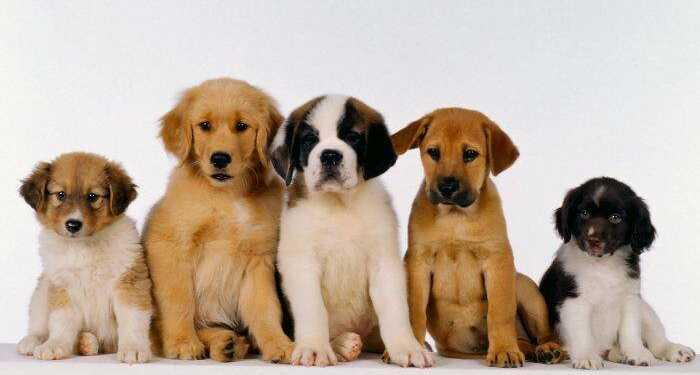 выбор собаки, завести собаку, какую собаку выбрать