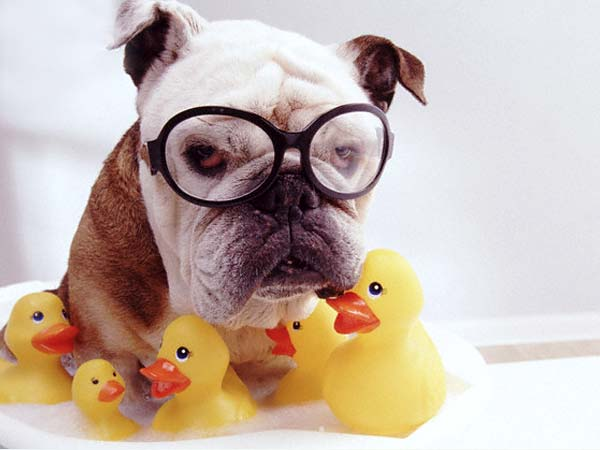 Дог-фрисби, игрушки для собак, моррисон, Пуллер, яйцо, конг, ирушка , собака