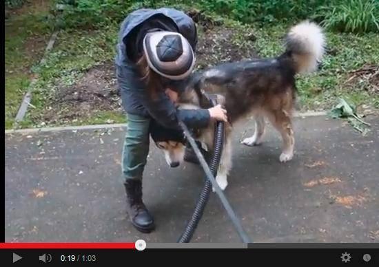 Фен для груминга собак