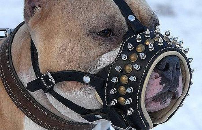 Амуниция для животных, амуниция для собак, ошейник для собак, поводок, намордник, шлея, ринговка