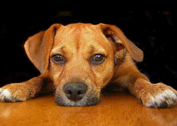 неврозы собак, стресс собак, здоровье собак, смена хозяина, петарды, собака боится грозы, боязнь громких звуков
