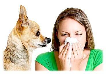 аллергия на собак, аллергологические пробы, правила при аллергии на собак
