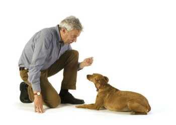 воспитание собаки, дрессировка собаки, общение с собакой, побои собаки, угрозы собак