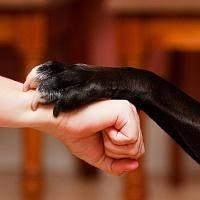 доверие собаки к хозяину, как вернуть доверие собаки, почему собака не доверяет, причины недоверия собаки