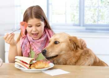 привычки собак, вредные привычки собак, собака спит на кровати, собака просит со стола, подбирание собаки, подбирание на улице