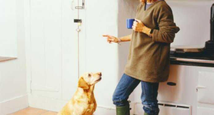наказание собак, как наказывать собак