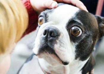 мифы о собаках, заблуждения о собаках, мокрый нос собаки, сухой нос собаки, дворняжки, сука должна родить, злые собаки, черная пасть, кормить мясом собаку,