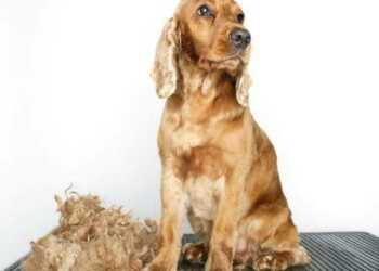 вредные советы для грумера, советы по грумингу, груминг, уход за шерстью собак