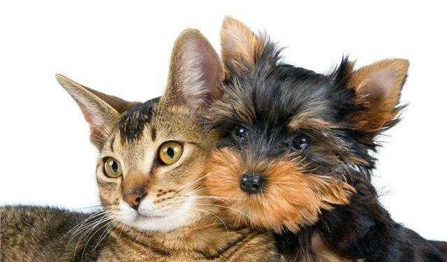 Кот и собака - мирись-мирись и больше не дерись! - секреты ...