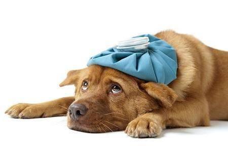 Стоматит, болезни собак, глоссит, Гастрит у собак,