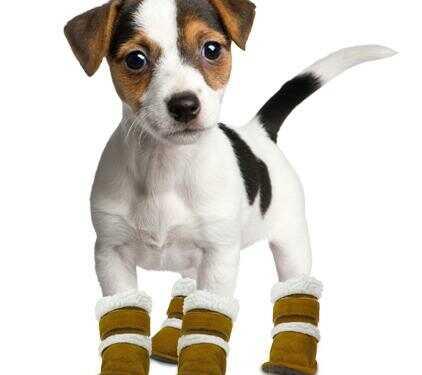 обувь для собак, приучить собаку к обуви, выбрать обувь для собаки