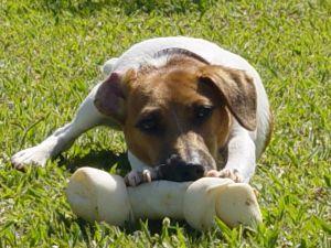 опасности для собаки, опасные лакомства длоя собаки, опасные игрушки для собаки, лифт и собака, собака в автомобиле, что нельзя давать собаке, игрушки для собаки