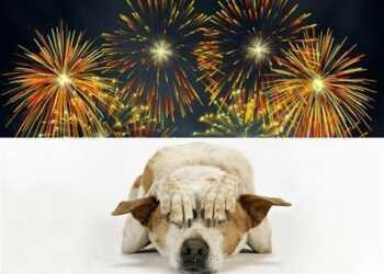петарды и собака, испуг собаки от взрыва петарды, симптомы испуга собаки, как приучить собаку к хлопкам, приучить собаку к взрыву петард, избавиться от испуга собаки
